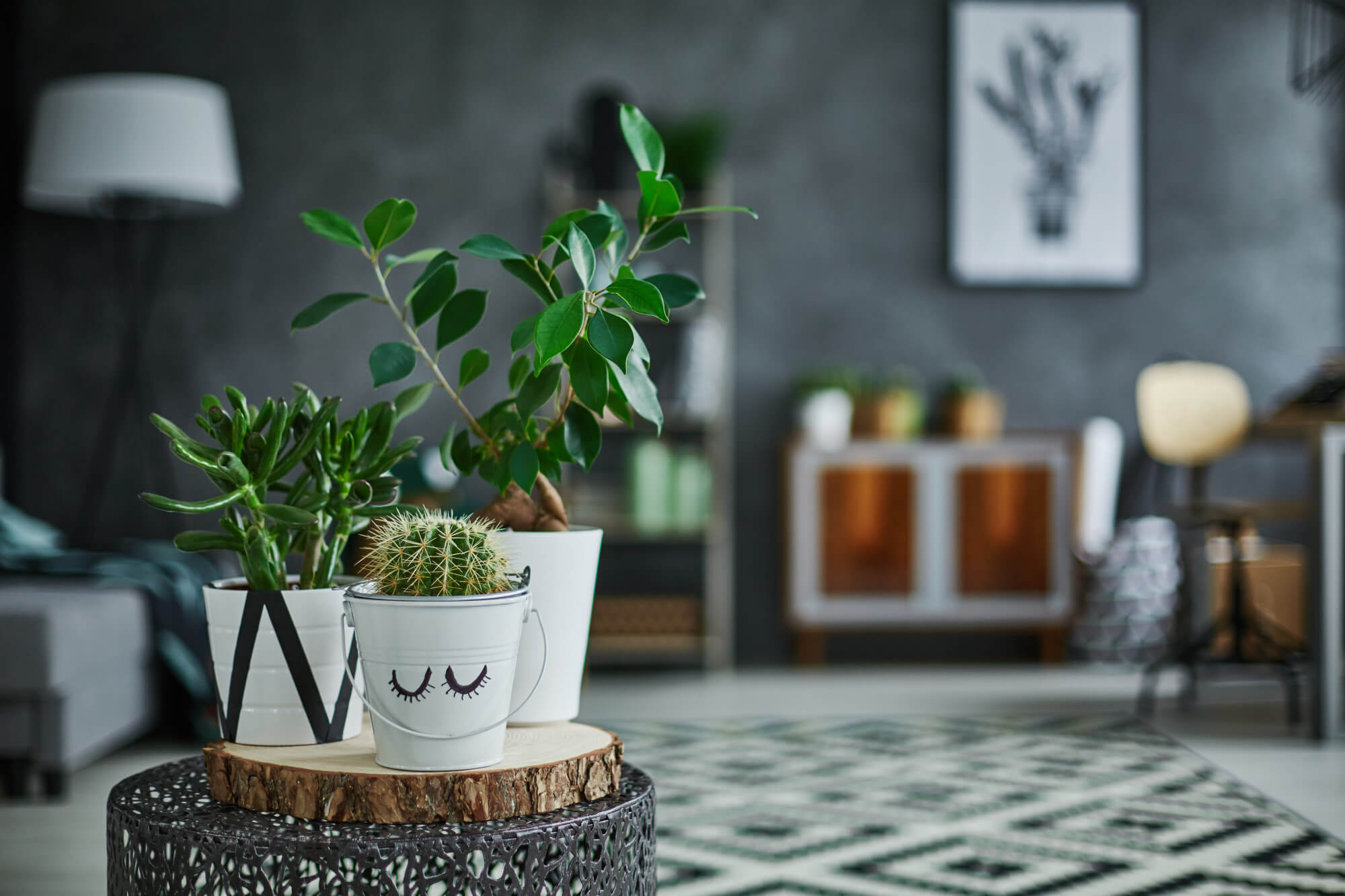 Enhance Your Health Outside and Inside Your Home With Houseplants